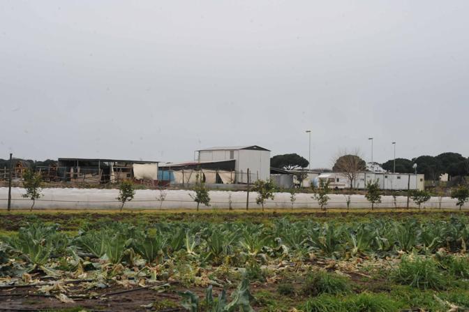 emento sul Parco dell'Appia Antica: una serie di capannoni abusivi nell'area protetta (foto Mario Proto)