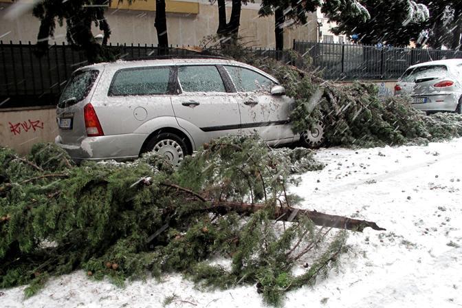 Alberi e rami caduti al Trionfale: oltre mille gli interventi dei vigili del fuoco (foto Eidon)