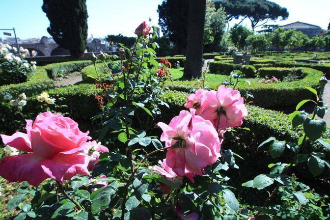 Roseto del giardino di Boni (Jpeg)
