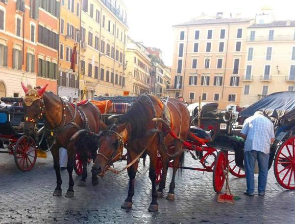 Due cavalli affaticati in piazza di Spagna, dopo l'incidente (foto OmniRoma)