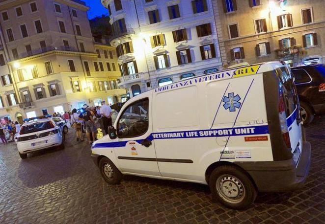 I soccorsi dell'ambulanza veterinaria in piazza di Spagna, dopo il malore al cavallo (foto Jpeg)