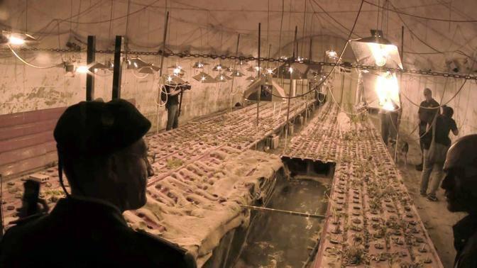 Un finanziere durante il blitz nella piantagione nascosta (foto Mario Proto)
