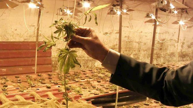 La droga sul mercato avrebbe fruttato oltre tre milioni di euro (foto Mario Proto)