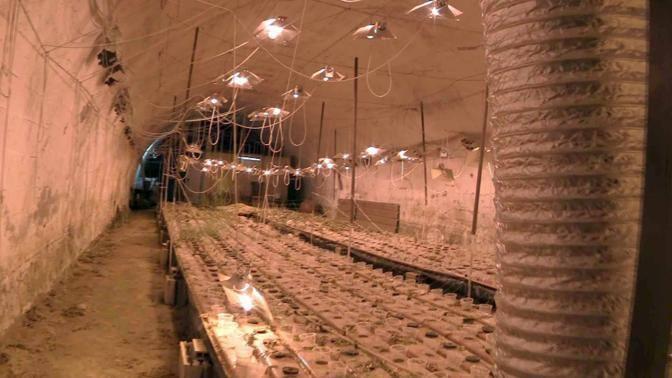 I locali trasformati in una «serra» per la marijuana (foto Mario Proto)