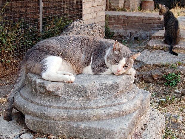 Gatti di Torre Argentina