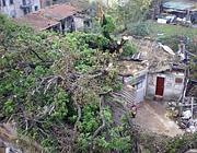 La quercia caduta (Jpeg)