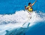 Una ragazza pratica il foot push con i delfini senza però muoversi in apnea