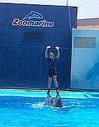 Un istruttore di Zoomarine con i due delfini (foto dal web)