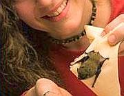 Un piccolo pipistrello ospite (foto Msn-Firenze)