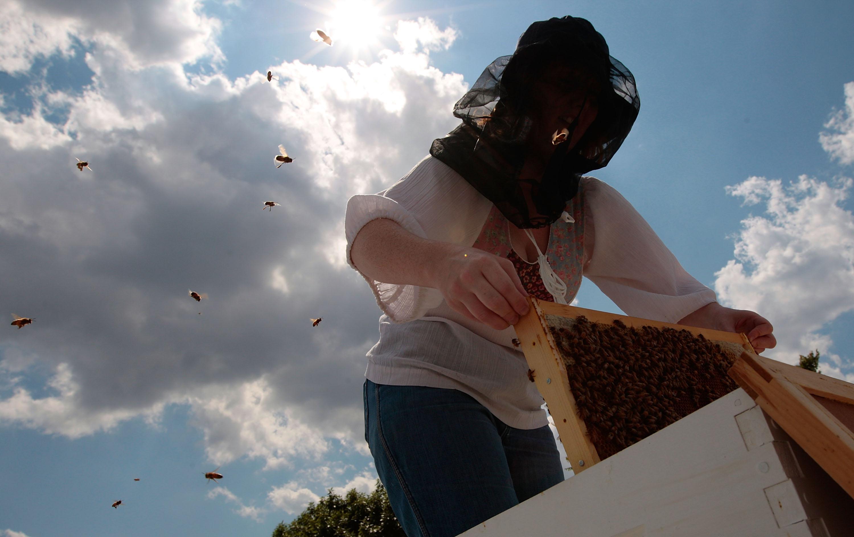 Un apicultore ispeziona le arnie (foto Afp)