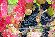 Dall'Umbria al Frusinate, colori dell'autunno tra vigne e boschi