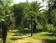 Alcune delle sessanta palme del vivaio Le Mura