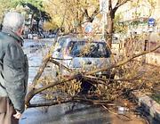 Rami e alberi caduti per il maltempo (foto Proto)