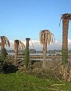Le palme di Ben Hur sul lago di Fogliano
