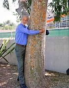 Renzo Piano abbraccia un albero: le sue Torri all'Eur sono caratterizzate da grandi serre