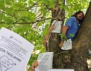 Un abitante-Tarzan sui platani di via del Vignola (foto Jpeg)