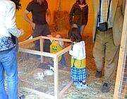 I bimbi scoprono i conigli all'agriasilo di Palazzo Rospigliosi