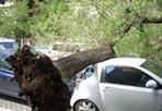 L'albero sulle auto - Un albero e' caduto nel primo pomeriggio in via Crescenzo, all'altezza del Liceo Artistico, colpendo un taxi di passaggio e due auto in sosta. Non ci sono stati feriti. Il taxi e' stato colpito sul cofano anteriore dalla chioma dell'albero, mentre una delle vetture parcheggiate e' stata colpita dal tronco sul cofano posteriore. Il traffico nella zona ha subito rallentamenti perché la strada e' divenuta a una sola corsia (Alighiero Palazzo/Ansa)