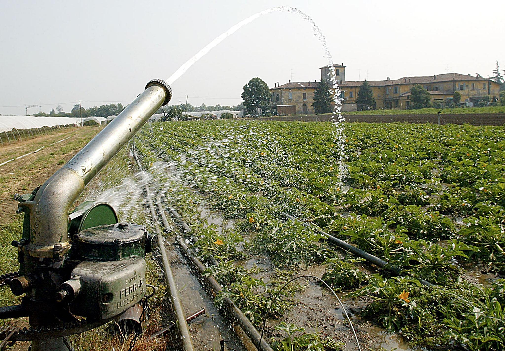 Irrigazione nell'agro Pontino: le acque all' arsenico mettono a rischio le produzioni agricole (foto Ansa)