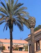 Una palma sana e una malata in piazza di Spagna (Jpeg)