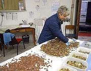 Il personale della Caritas pulisce e divide le monetine raccolte nella Fontana di Trevi (Montesi)
