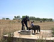 Le ricerche dei piccoli Francesco e Salvatore Pappalardo scomparsi a Gravina nel 2007 e poi ritrovati morti in un pozzo