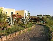 Il giardino dell'Elicriso