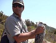 Una guardia forestale  del Parco del Circeo libera un gabbiano a Zannone