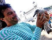 Un gabbiano ferito cadendo dal nido in città