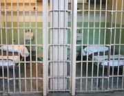 Due celle del carcere di Viterbo (foto Camilli)