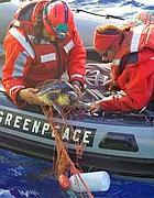 Volontari liberano una tartaruga imprigionata in una rete ferrettara