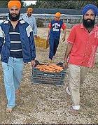 Contadini sikh a Sabaudia (dal web)