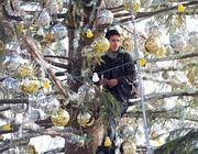 Il giovane che era salito sull'albero di Natale (Ansa)