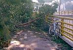 Pista non ciclabile - Un'immagine di alberi caduti che il 12 febbraio hanno invaso la pista ciclabile sulla Cristoforo Colombo all'altezza dell'uscita del sottopasso Circonvallazione Ostiense (foto Fausto Bonafaccia)