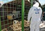Canile sequestrato - Sequestrato un canile nel viterbese gestito ad privati dopo la scoperta di decine di cuccioli appena  nati e soppressi.  Il blitz è scattato in seguito a una segnalazione giunta al  Nucleo investigativo provinciale di Polizia ambientale e forestale  (Nipaf) di Viterbo.  Gli agenti hanno riscontrato che una parte dei circa 300 cani ospitati nella struttura non erano stati sottoposti a un piano di sterilizzazione, come le normative di settore prevedono. Inoltre, i cuccioli alla nascita venivano strappati alle madri e soppressi per affogamento, poi chiusi in sacchi e gettati nei cassonetti dell'immondizia  (foto Omniroma)