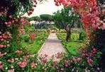 I colori del roseto - Sabato mattina al Roseto Comunale si terrà la 70a edizione del «Premio Roma per Nuove Varietà di Rose» promosso e organizzato dall'assessorato all'Ambiente di Roma Capitale. (Foto Mario Proto)