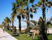 Un lido in vendita sulla costa adriatica