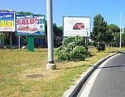 Selva di pubblicità in via Tina Pica: tra i cartelloni un albero abbattuto