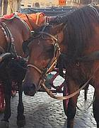 Cavalli in piazza di Spagna (Omniroma)