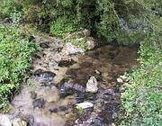 I liquami nel corso d'acqua a Filettino