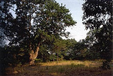 Il bosco della tenuta presidenziale