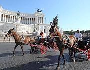Botticelle a piazza Venezia