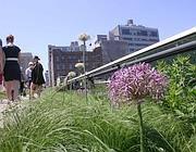 Orti urbani sulla high line di New York (foto Zanini)