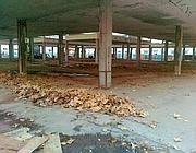 La struttura del vecchio mercato di Testaccio demolita tre mesi fa