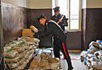 Maxisequestro - Due cittadini albanesi di 20 anni e una cittadina romena di 19 sono stati arrestati con l'accusa di detenzione ai fini di spaccio di sostanze stupefacenti. I militari dopo aver monitorato a lungo i movimenti degli arrestati, che vivevano in un appartamento in zona San Giovanni, a Roma, sono riusciti a localizzare in un box in via Muzio Attendolo un vero e proprio deposito. Sequestrati 314 pacchi, contenenti marijuana, per un peso complessivo di 410 chili. I pacchetti erano stati bagnati con del gasolio per  cercare di nascondere il forte odore. La droga sequestrata, destinata alle piazze del Pigneto e di San Lorenzo, avrebbe fruttato qualora immessa nel mercato dello spaccio circa 1 milione di euro (foto Proto)