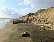 L'erosione dell'arenile sulla costa di Sabaudia