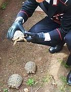 Le tartarughe rubate (foto  Proto )