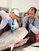 Il sushiman inizia a sezionare il tonno