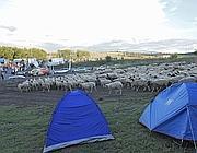 Le pecore e le tende (Jpeg)