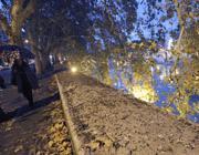 Guano degli storni sui muraglioni del Tevere (Jpeg)